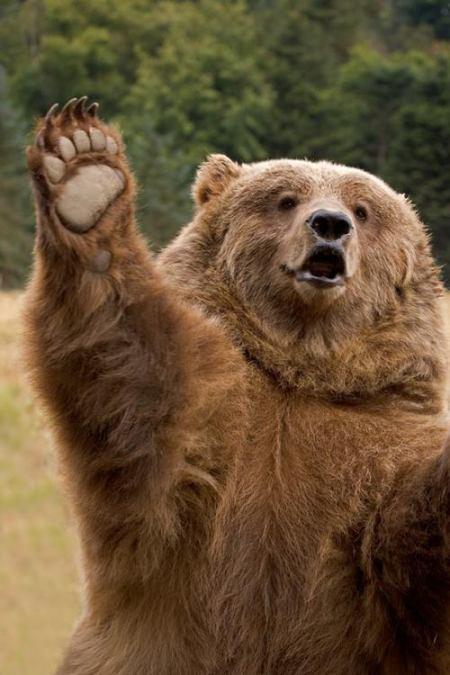 aaa-bear78